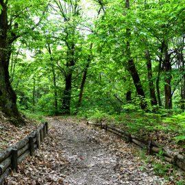 30 giugno: Cerchio sciamanico nel bosco
