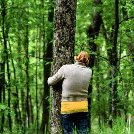 Lo spirito degli alberi 2017