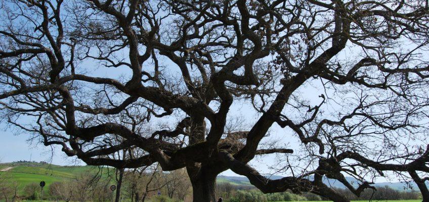 La magia degli alberi – 15 ottobre 2016