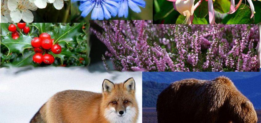 Floriterapia Esistenziale