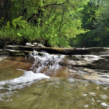 Il viaggio dell'eroe: due giorni nelle foreste casentinesi per ritrovare se stessi