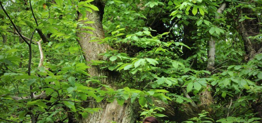 Lo Spirito degli alberi 2021